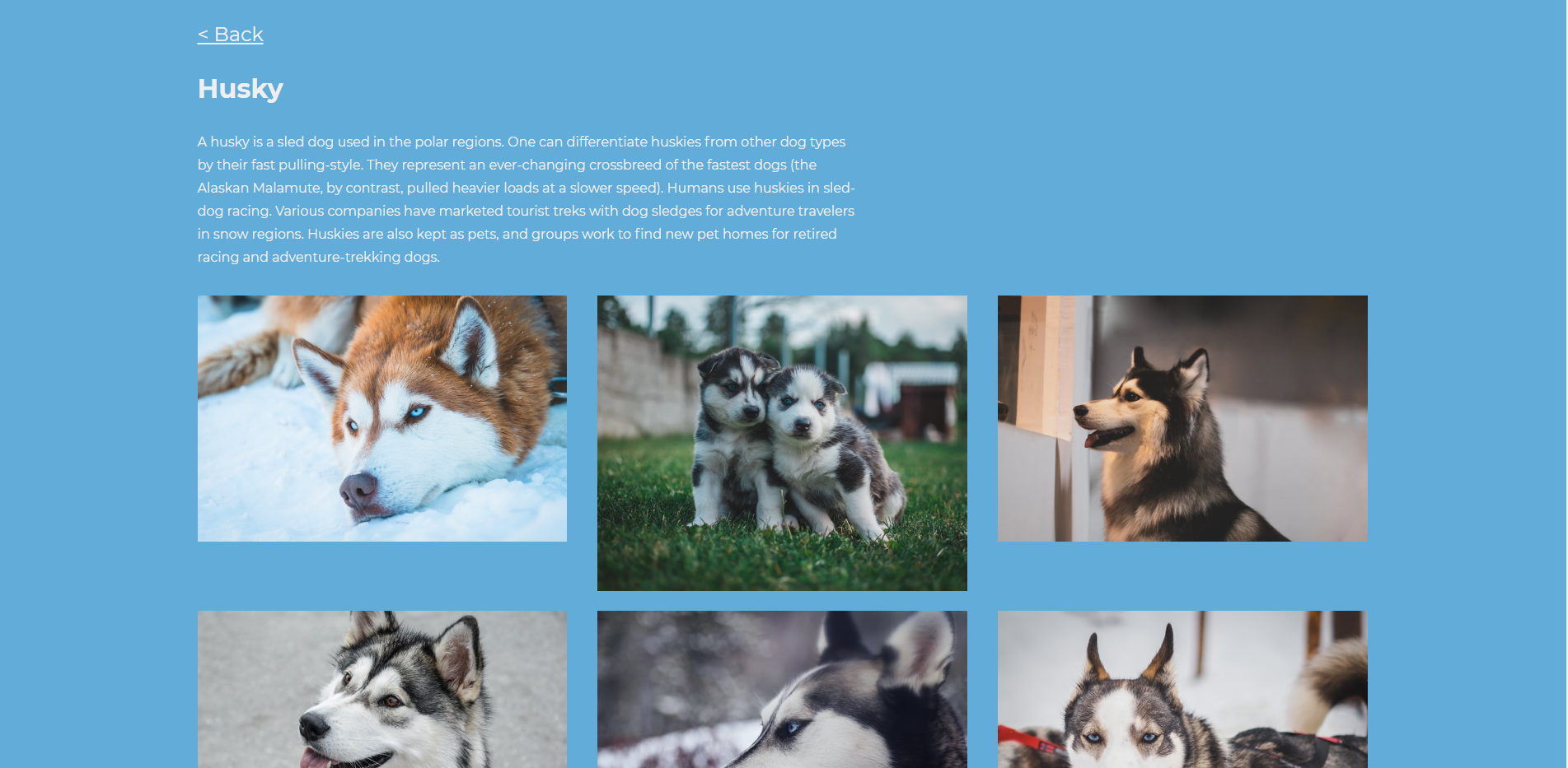 Demo Husky Page from local