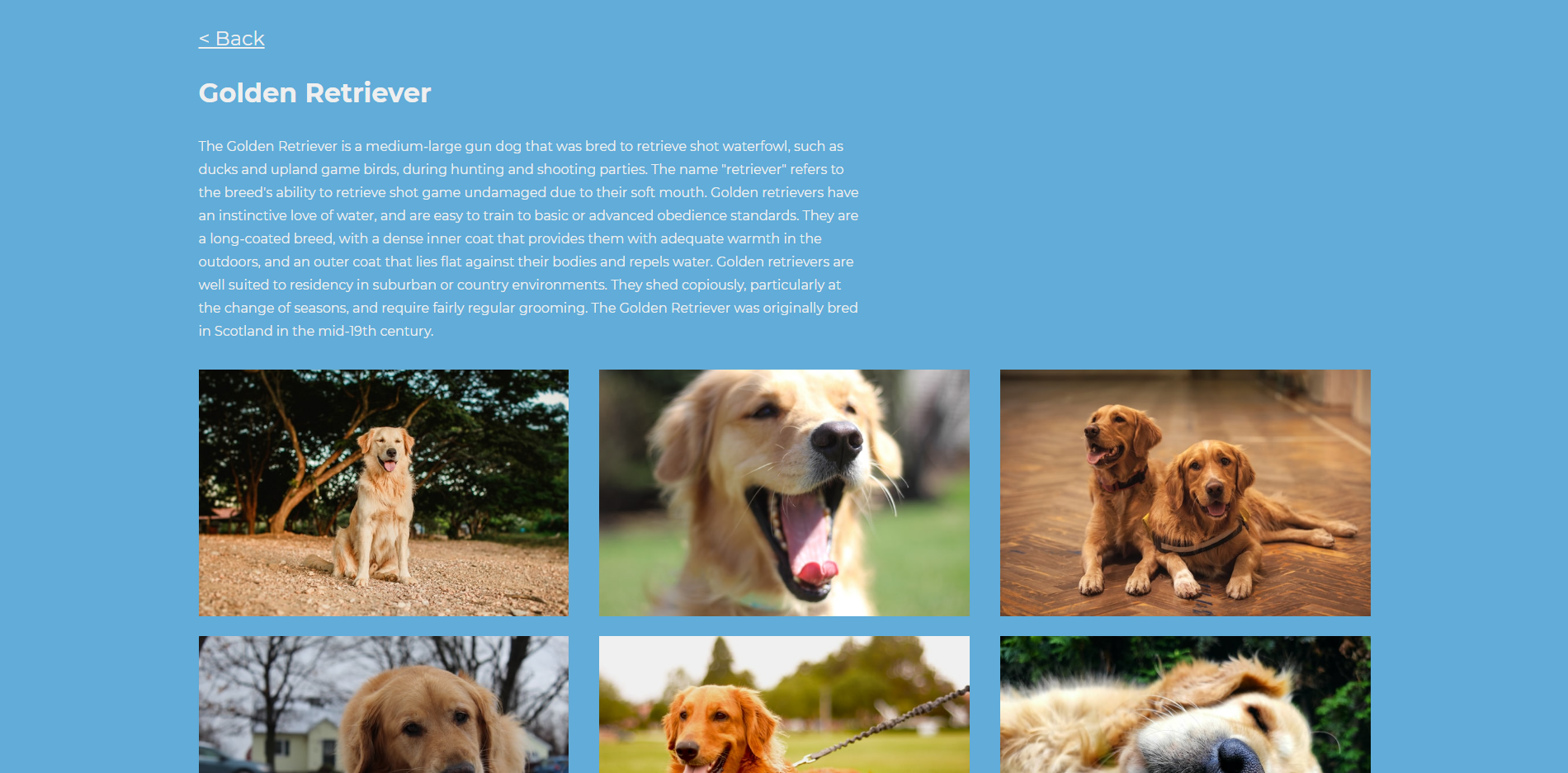 Demo Golden Retriever Page from local
